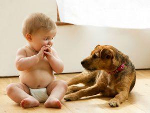 Kućni ljubimci i zdravlje beba